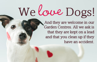 We love Dogs!
