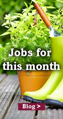 Jobs to do this month in June