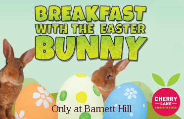 Breakfast with the Easter bunny - Barnett Hill by Cherry Lane