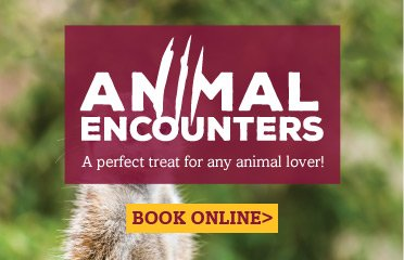 Attend our Animal Encounters event