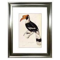See more information about the Tropical Birds Hornbill Framed Print Wall Art 16 x 12 Inch