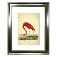 See more information about the Tropical Birds American Flamingo Framed Print Wall Art 16 x 12 Inch