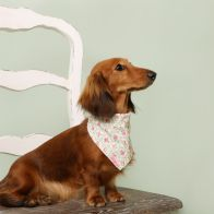 See more information about the Cath Kidston Provence Rose Adjustable Pet Bandana S/M